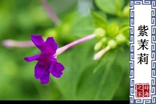 紫茉�? /></div>                             </div>                         </div>                                                  </div>                     <div class=