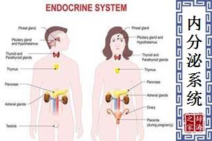 内分泌系统